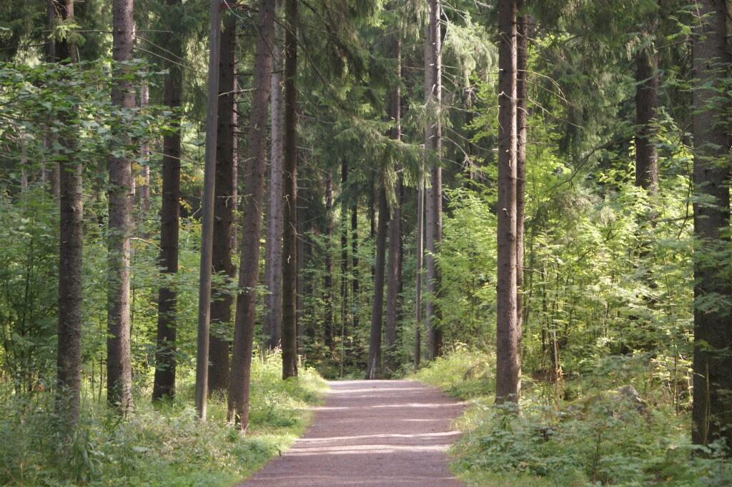 Kuvan oikeudet: Metsäkeskus, Pirkanmaan alueyksikkö.
